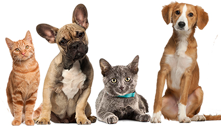 Keep your pet healthy | Nohl Ranch Animal Hospital In Orange County, LA