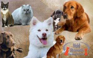 Nohl Ranch Animal Hospital in Orange, CA | blog | Pets skin and fur