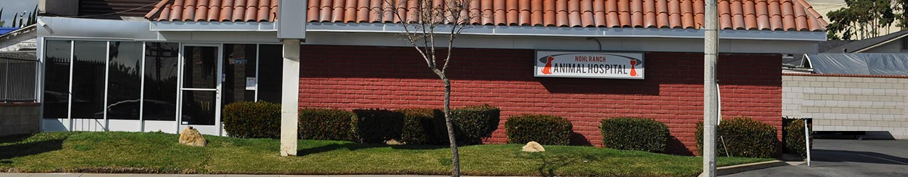 Nohl Ranch Animal Hospital in Orange, CA | Front entrance