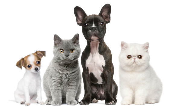 Nohl Ranch Animal Hospital in Orange, CA | Blog | 20% OFF Growth Removal