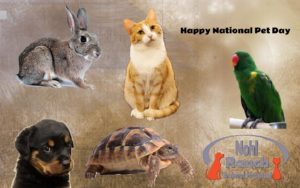 Nohl Ranch Animal Hospital Veterinarian in Orange, CA blog | Happy National Pet Day | Adopt a pet on April 11 and get a free office Exam and a Free first round of vaccination.