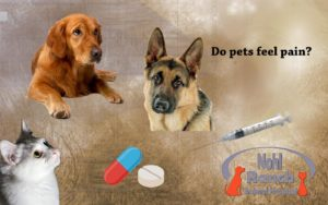 Nohl Ranch Animal Hospital | Pet care in Orange County, CA | Do pets feel pain?