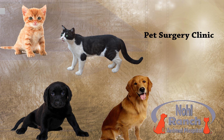 Nohl Ranch Pet Surgery Clinic | Veterinary Clinic Orange, CA | Animal Hospital