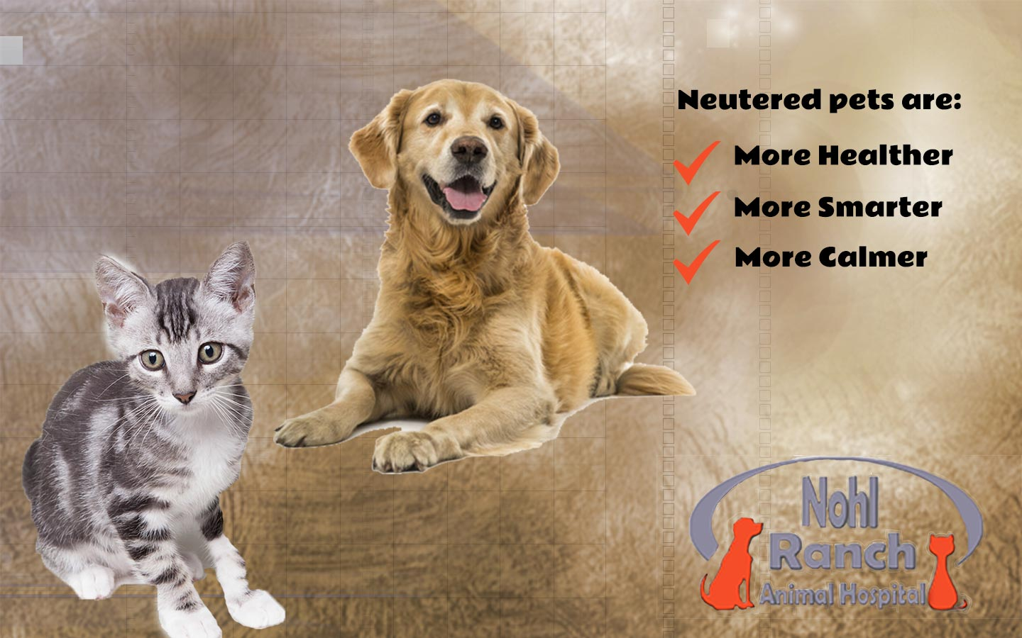 Nohl Ranch Animal Hospital Veterinarian in Orange, CA blog | Spay or Neuter Your Pet