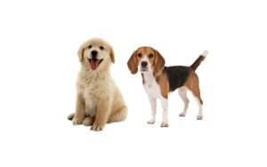 Nohl Ranch Animal Hospital in Orange, CA | Offer- Coupon | 10% OFF Flea & Tick Prevention | How to protect your pets
