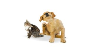 Nohl Ranch Animal Hospital in Orange, CA | Offer- Coupon | 10% OFF Flea & Tick Prevention