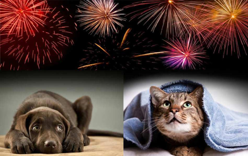 Animal Hospital in Orange, CA | Veterinary Clinic | My Pet and Fireworks