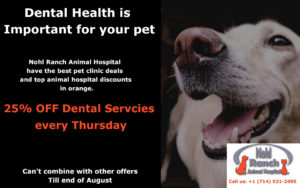 Dental health is Important for your pet | Best pet clinic offers
