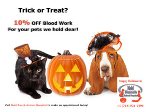 10% Off Blood Work | Have no fear, no tricks here!