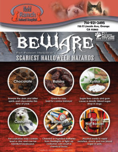 Beware pet poison helpline scariest Halloween hazards