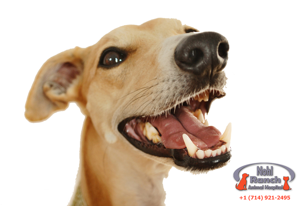 Pet Dental Health Month