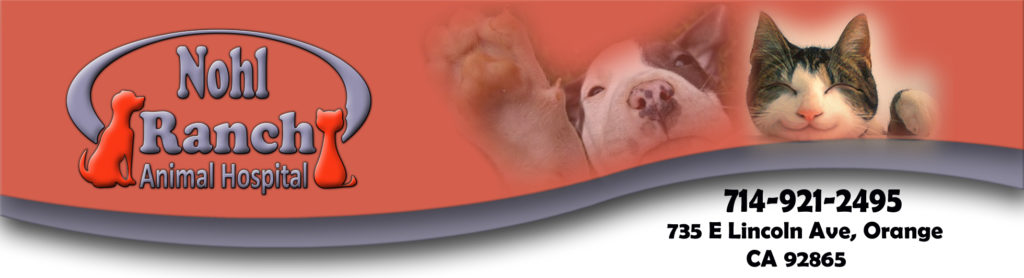 Animal Hospital Banner