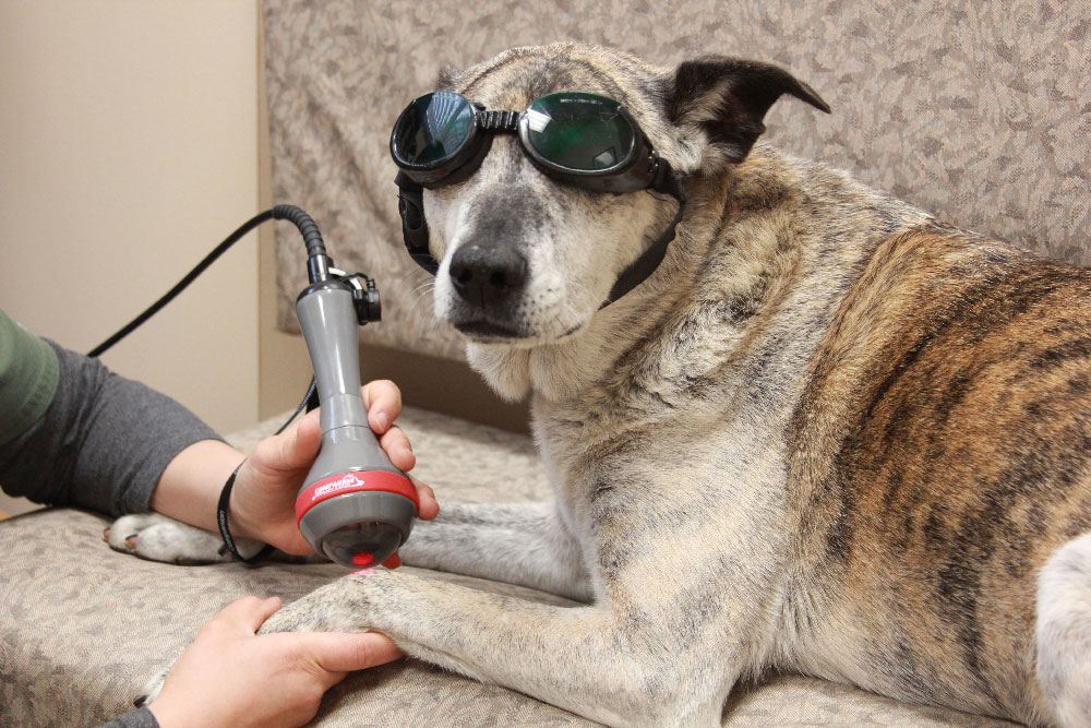 Nohl Animal Hospital in Orange | Laser Therapy Service