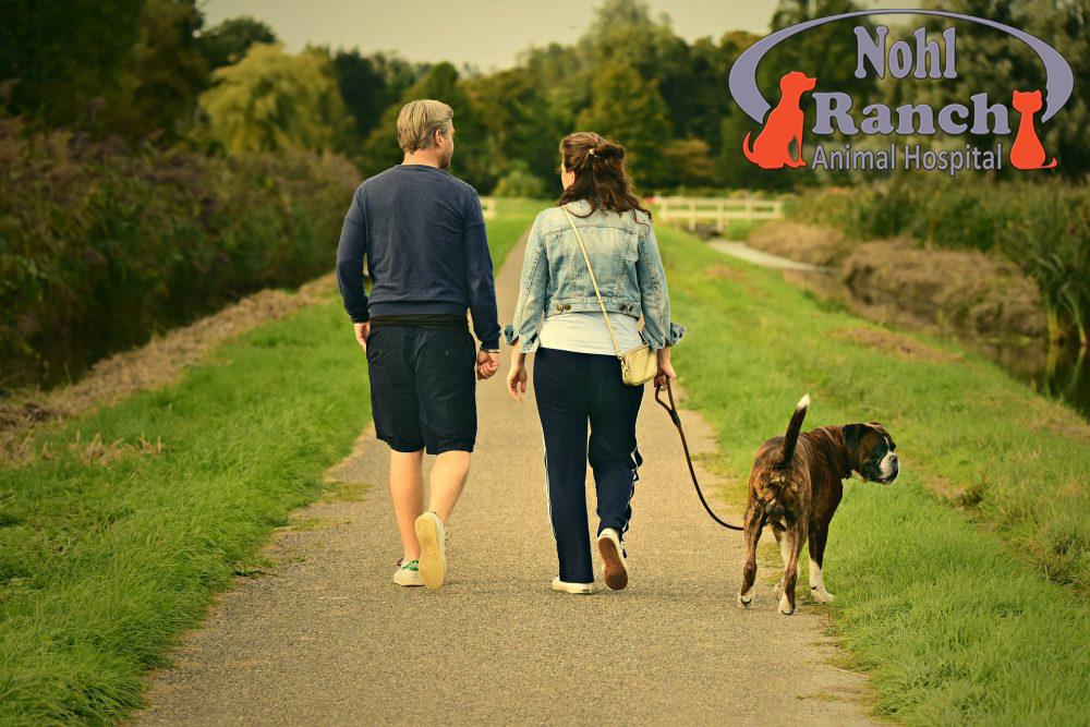 Walk Your Pet Month, Orange Pet Clinic
