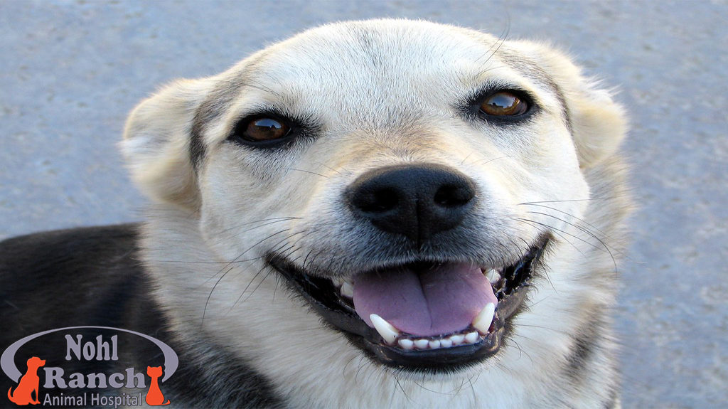 Pet Dental Health Month | Orange Vet Hospital