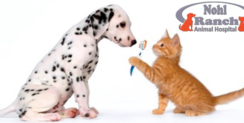 Pet Dental Health Month | Orange Pet Clinic