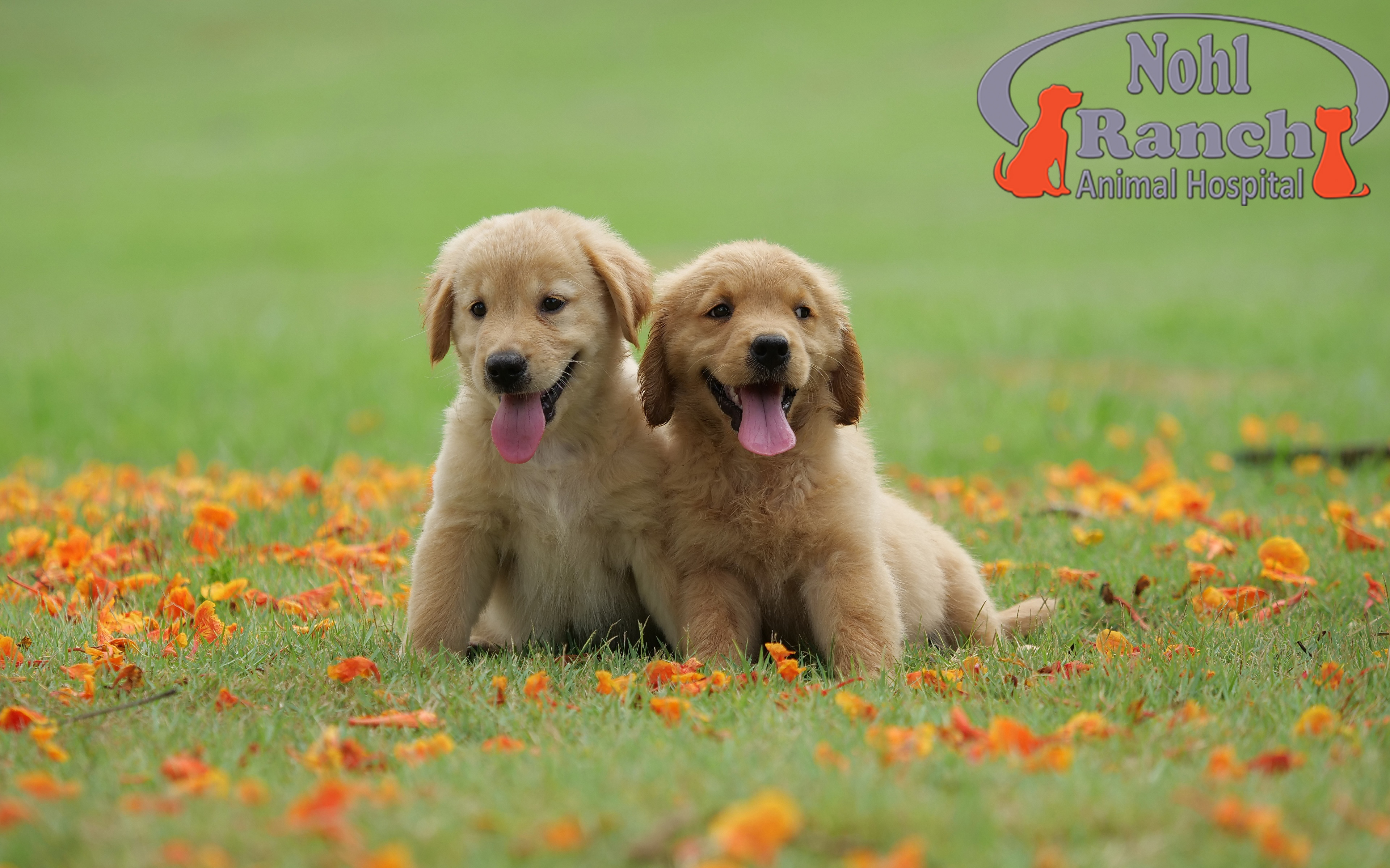 National Puppy Day | Orange Pet Clinic