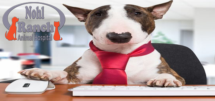 National Take Your Dog to Work Day | Orange Pet Clinic