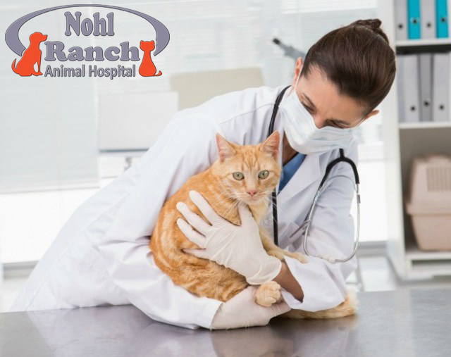 National Take Your Cat To Vet Day | Orange Pet Clinic