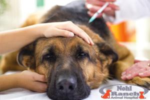 Animal Pain Awareness | Orange Pet Clinic