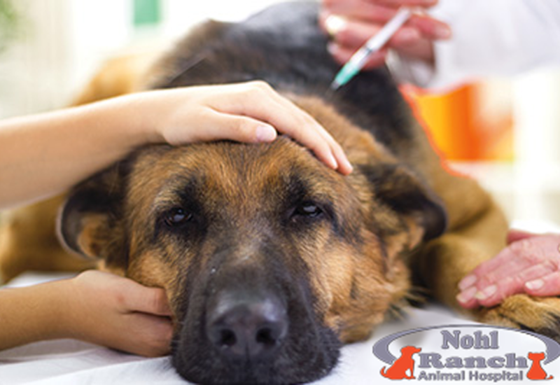 Animal Pain Awareness | Orange Pet Clinic