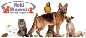 Animal Safety and Protection Month | Orange Pet Clinic