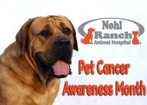 Pet Cancer Awareness Month | Orange Pet Clinic