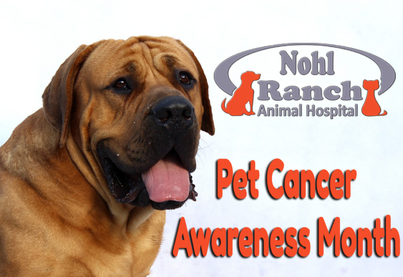 Pet Cancer Awareness Month | Orange Pet Clinic