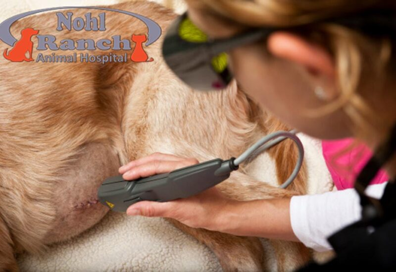 Pet Laser Therapy | Top Orange Pet Clinic