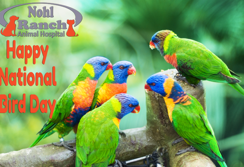 National Bird Day | Top Orange Pet Clinic