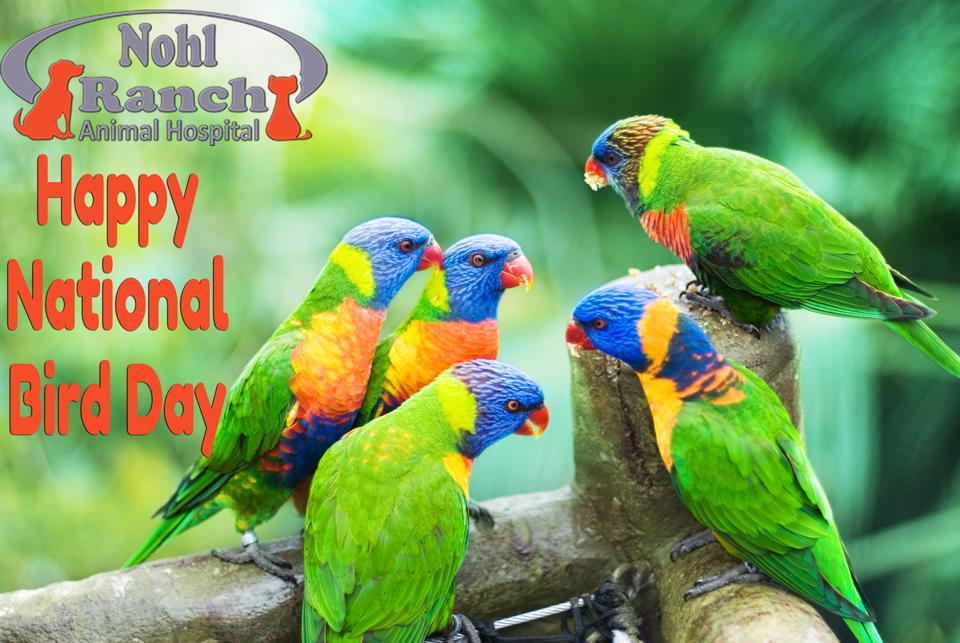 National Bird Day | Top Orange Pet Clinic