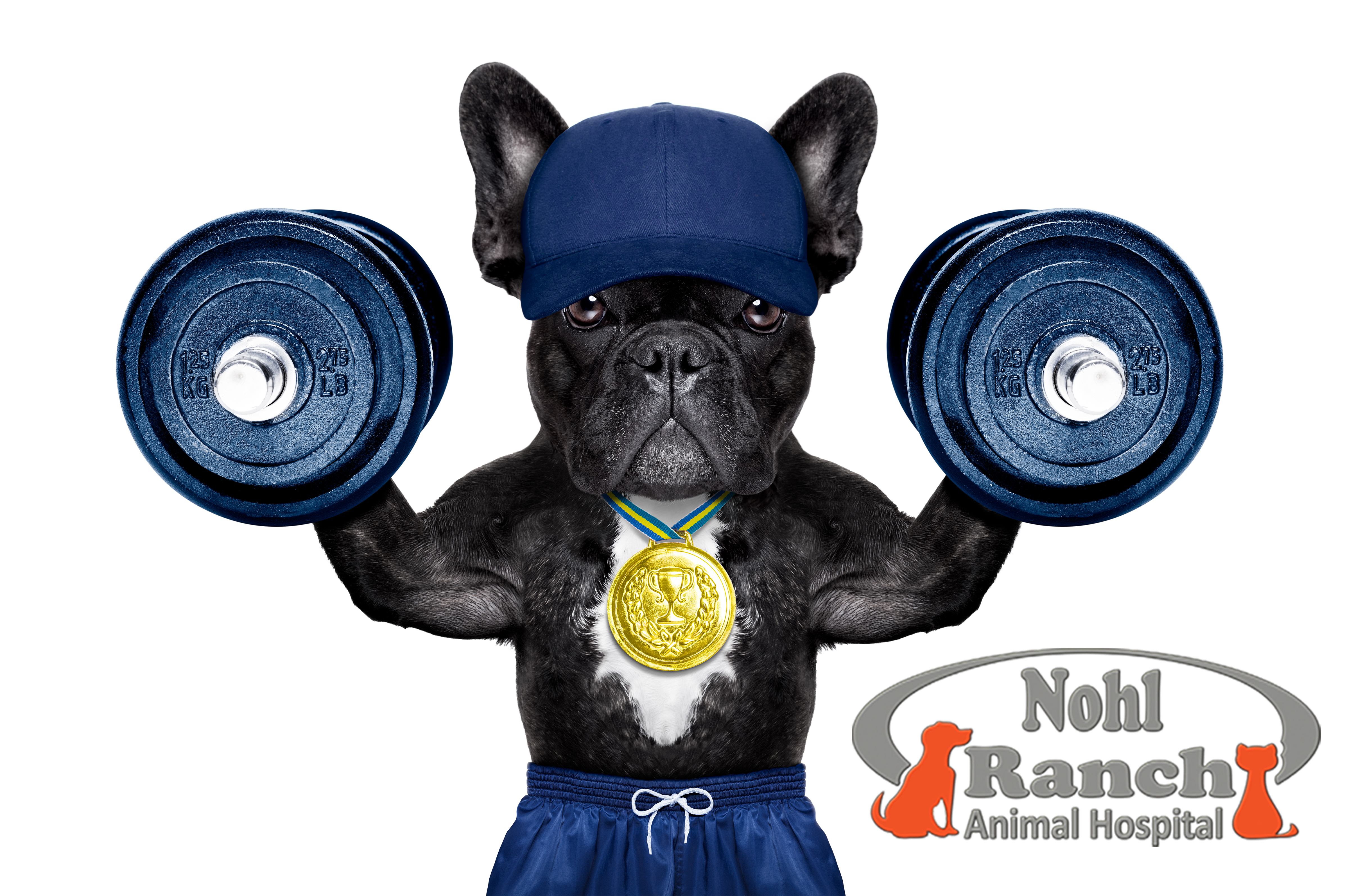 Active Dog with Dumbbells